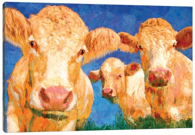 Curious Canvas Art Print