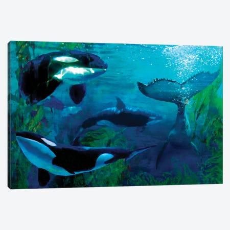 Orca Canvas Print #LIR46} by Lisa Robinson Art Print
