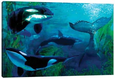 Orca Canvas Art Print