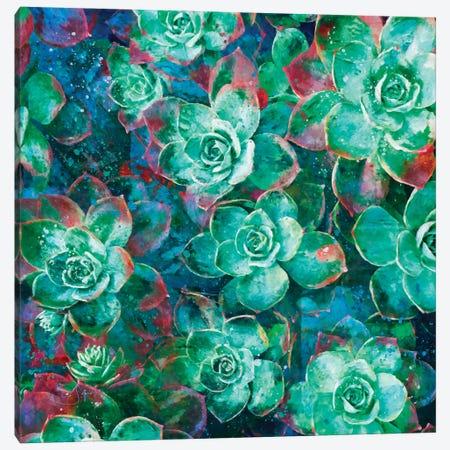 Succulent Canvas Print #LIR59} by Lisa Robinson Canvas Art Print
