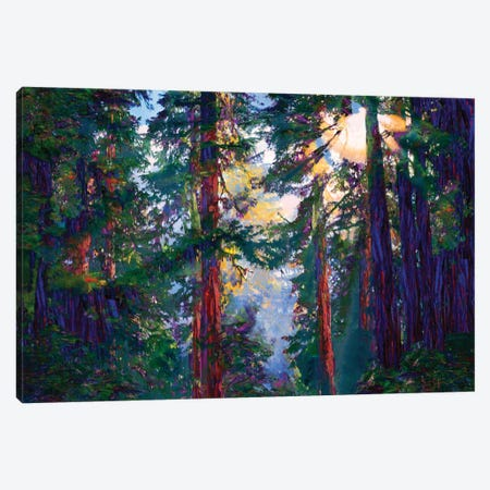 Sunlight Through Trees Canvas Print #LIR60} by Lisa Robinson Canvas Art