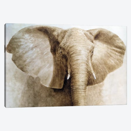 Elephant Canvas Print #LIS12} by Lincoln Seligman Canvas Artwork
