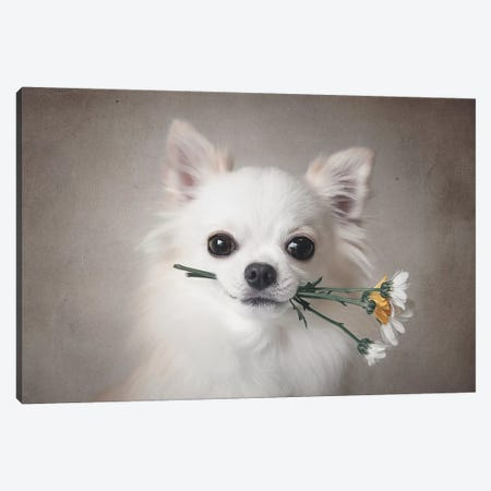 Chihuahua With Flowers Canvas Print #LJP1} by Lienjp Canvas Art