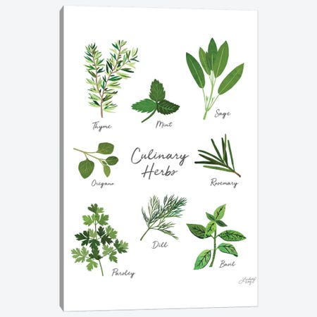 Culinary Herbs White Canvas Print #LKC15} by LindseyKayCo Canvas Artwork