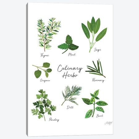 Culinary Herbs White Canvas Print #LKC15} by LindseyKayCo Canvas Artwork
