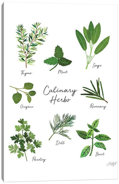 Culinary Herbs White Canvas Art Print