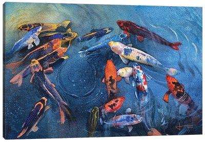 Koi Frenzy Canvas Art Print