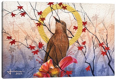 Chestnut tailed starling Canvas Art Print