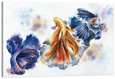 Beta Fish Canvas Art Print