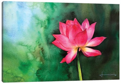 Water Lily II Canvas Art Print