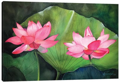 Water Lily IV Canvas Art Print