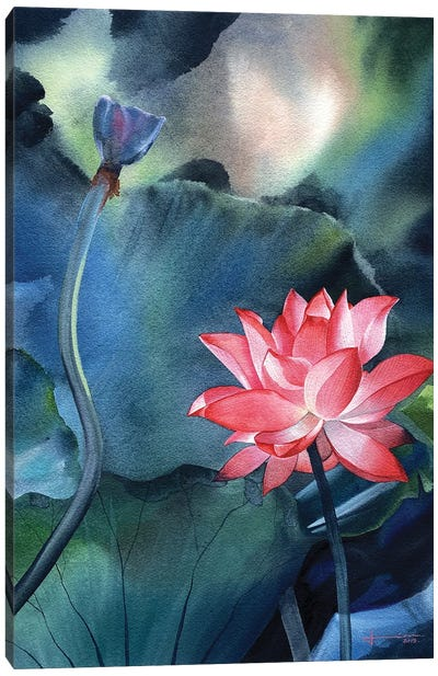 Water Lily V Canvas Art Print