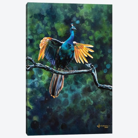 Peacock Take Off Canvas Print #LKM67} by Liam Kumawat Canvas Art Print