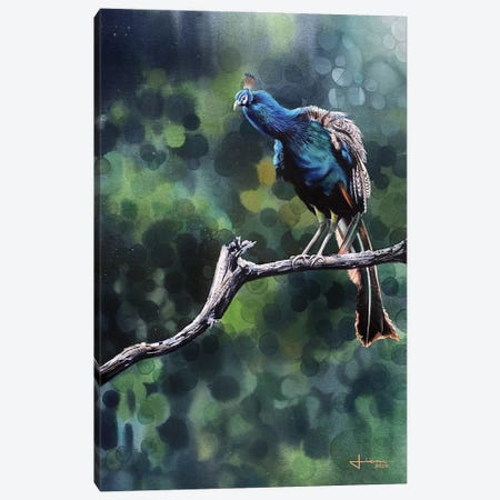 Perched Peacock Canvas Print #LKM71} by Liam Kumawat Art Print