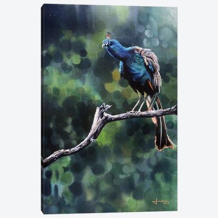 Perched Peacock Canvas Print #LKM71} by Liam Kumawat Art Print