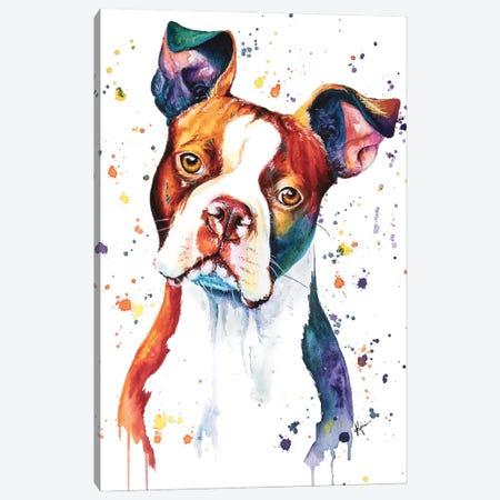 Boston Terrier Canvas Print #LKV19} by Lindsay Kivi Canvas Art