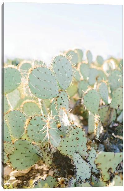 Prickly Pear II, Tuscon, Arizona Canvas Art Print