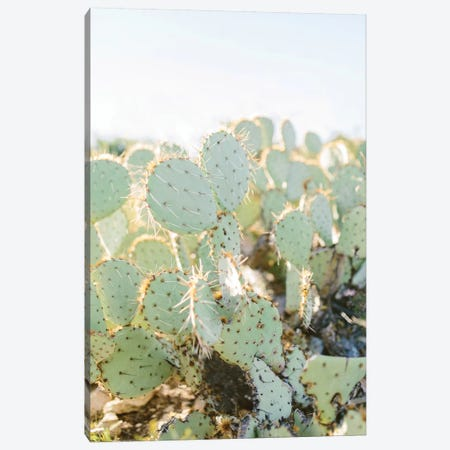 Prickly Pear II, Tuscon, Arizona Canvas Print #LLH101} by lovelylittlehomeco Canvas Print