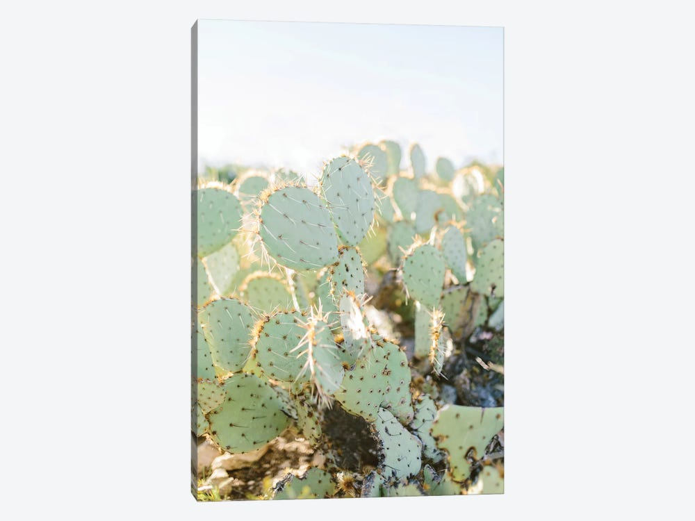 Prickly Pear II, Tuscon, Arizona by lovelylittlehomeco 1-piece Canvas Art Print