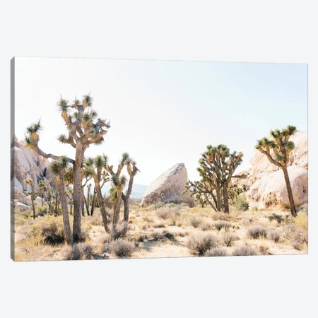 Desert Landscape I, Joshua Tree, California Canvas Print #LLH50} by lovelylittlehomeco Art Print
