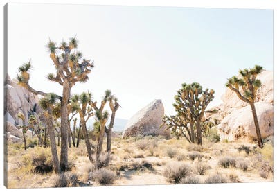 Desert Landscape I, Joshua Tree, California Canvas Art Print