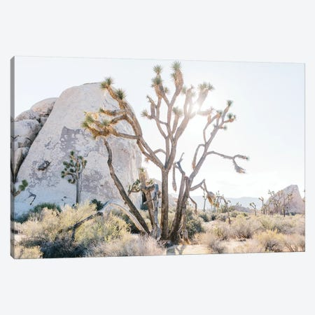 Desert Landscape II, Joshua Tree, California Canvas Print #LLH51} by lovelylittlehomeco Canvas Print