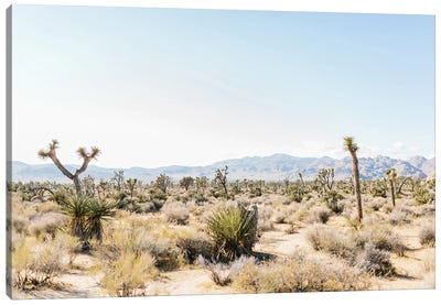 Desert Landscape III, Joshua Tree, California Canvas Art Print