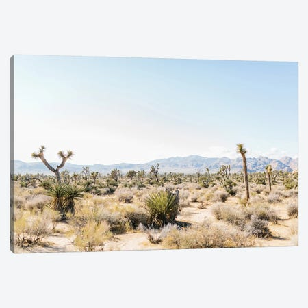 Desert Landscape III, Joshua Tree, California Canvas Print #LLH52} by lovelylittlehomeco Canvas Print