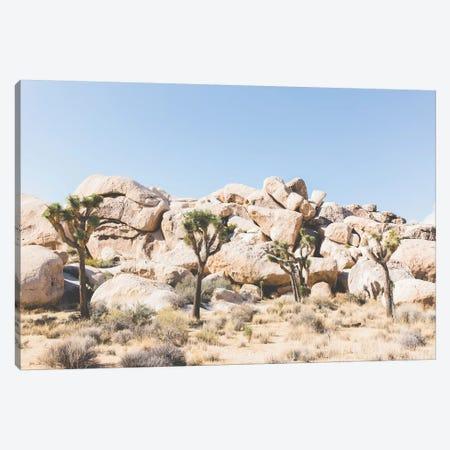 Desert Landscape IV, Joshua Tree, California Canvas Print #LLH53} by lovelylittlehomeco Art Print