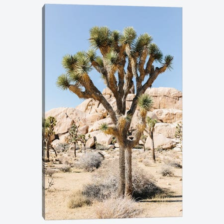 Desert Landscape V, Joshua Tree, California Canvas Print #LLH54} by lovelylittlehomeco Canvas Art