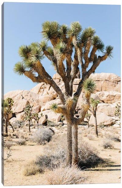 Desert Landscape V, Joshua Tree, California Canvas Art Print