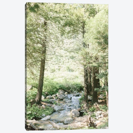 Forest, Big Sur, California Canvas Print #LLH63} by lovelylittlehomeco Canvas Artwork