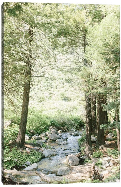 Forest, Big Sur, California Canvas Art Print