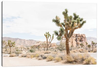 Joshua Tree, Mohave Desert Canvas Art Print