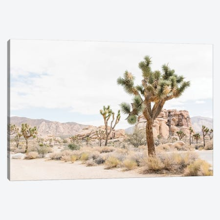 Joshua Tree, Mohave Desert Canvas Print #LLH71} by lovelylittlehomeco Canvas Print