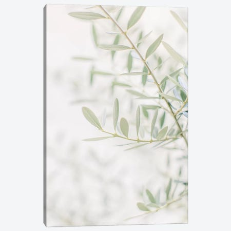 Olive Tree Closeup, Florence, Italy Canvas Print #LLH87} by lovelylittlehomeco Canvas Print