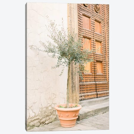 Olive Tree, Florence, Italy Canvas Print #LLH88} by lovelylittlehomeco Canvas Wall Art