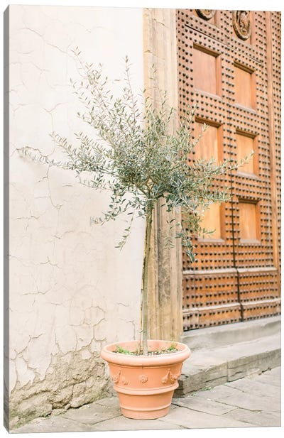 Olive Tree, Florence, Italy Canvas Art Print
