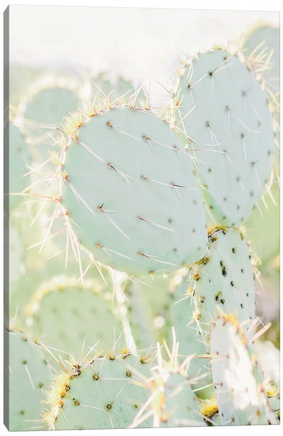 Prickly Pear I, Tuscon, Arizona Canvas Art Print