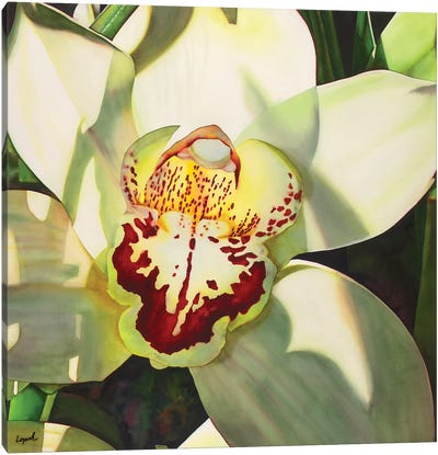 Pale Orchid II Canvas Art Print
