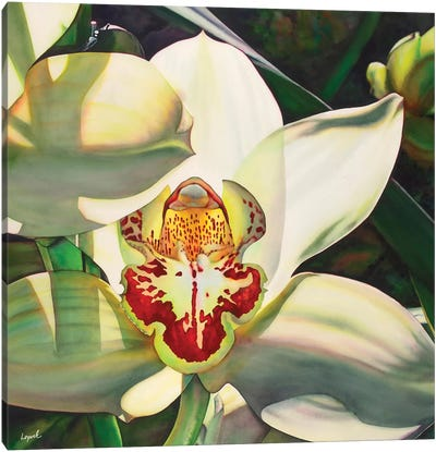 Pale Orchid III Canvas Art Print