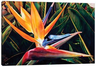 Weekend Catalina Canvas Art Print