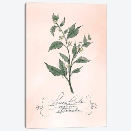 Lemonbalm Canvas Print #LLV134} by Lily & Val Canvas Print