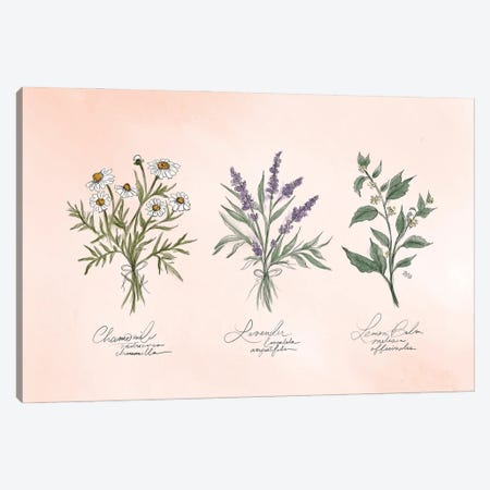 Calming Herbs Canvas Print #LLV37} by Lily & Val Canvas Art