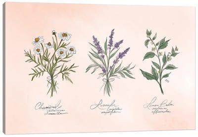 Calming Herbs Canvas Art Print