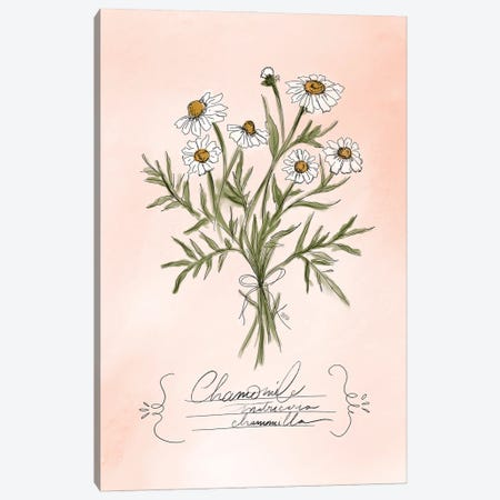 Chamomile Canvas Print #LLV40} by Lily & Val Canvas Artwork
