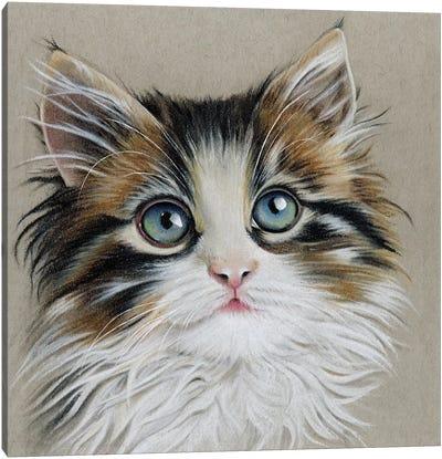 Kitten Portrait II Canvas Art Print