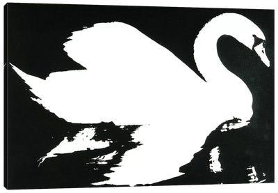 Swan Study 1 Canvas Art Print