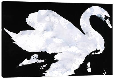 Swan Study 2 Canvas Art Print