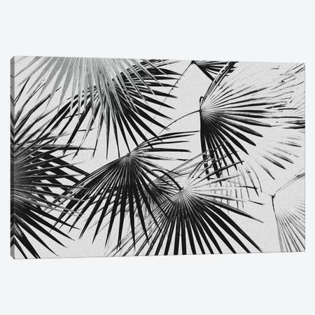 Tropical V Canvas Print #LMO134} by LEEMO Canvas Art